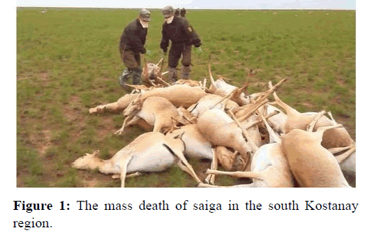 ijpaz-death-of-saiga
